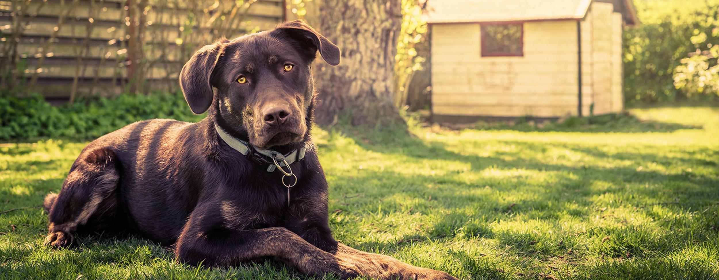 Perch conviene l 39 assicurazione animali le responsabilit for Assicurazione casa on line