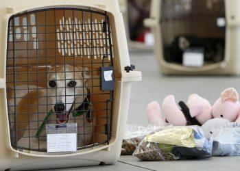 Assicurazione-cani